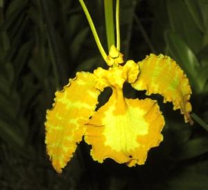 orquida-001