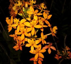 orquida-007