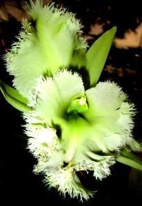 orquida-015