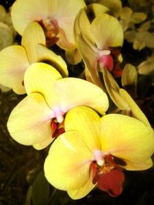 orquida-017