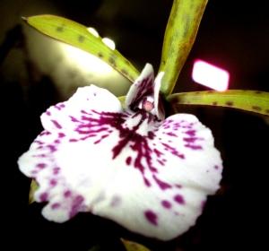 orquida-023