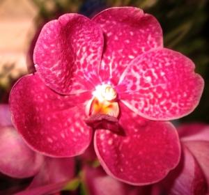 orquida-032