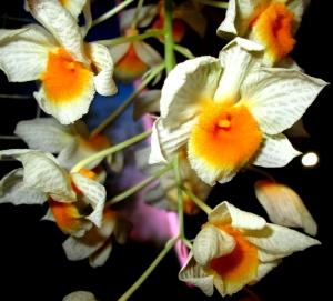 orquida-033