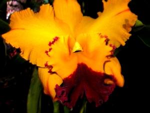 orquida-036
