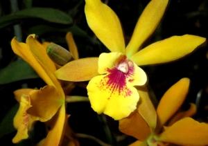 orquida-043