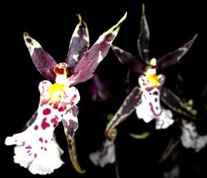 orquida-048